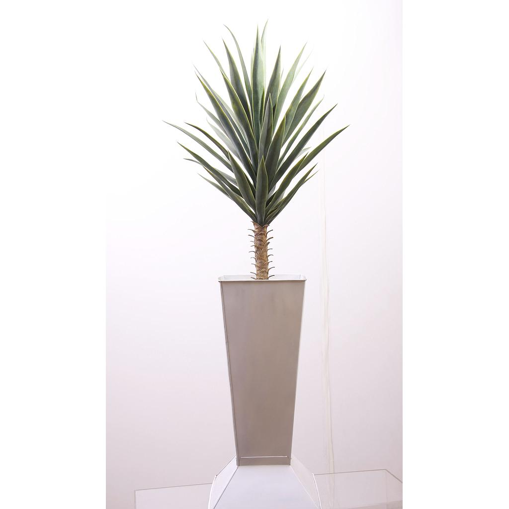 Agave Plant 75cm in White Container