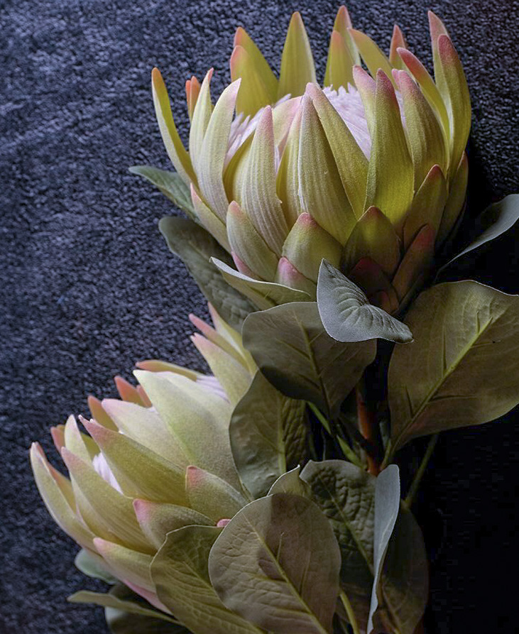 Green Protea Large